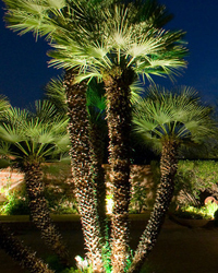 Palm tree with exterior lighting