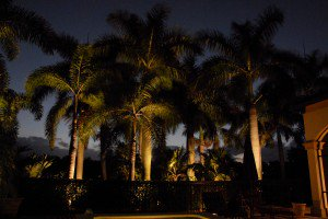 naples backyard palm tree lighting