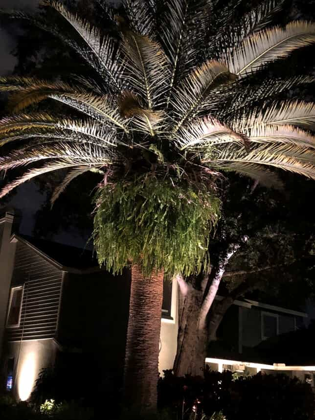 palm tree in front yard of home that is illuminated with lighting