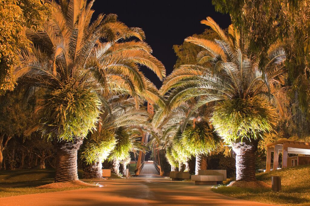 Palm trees with specialty lighting