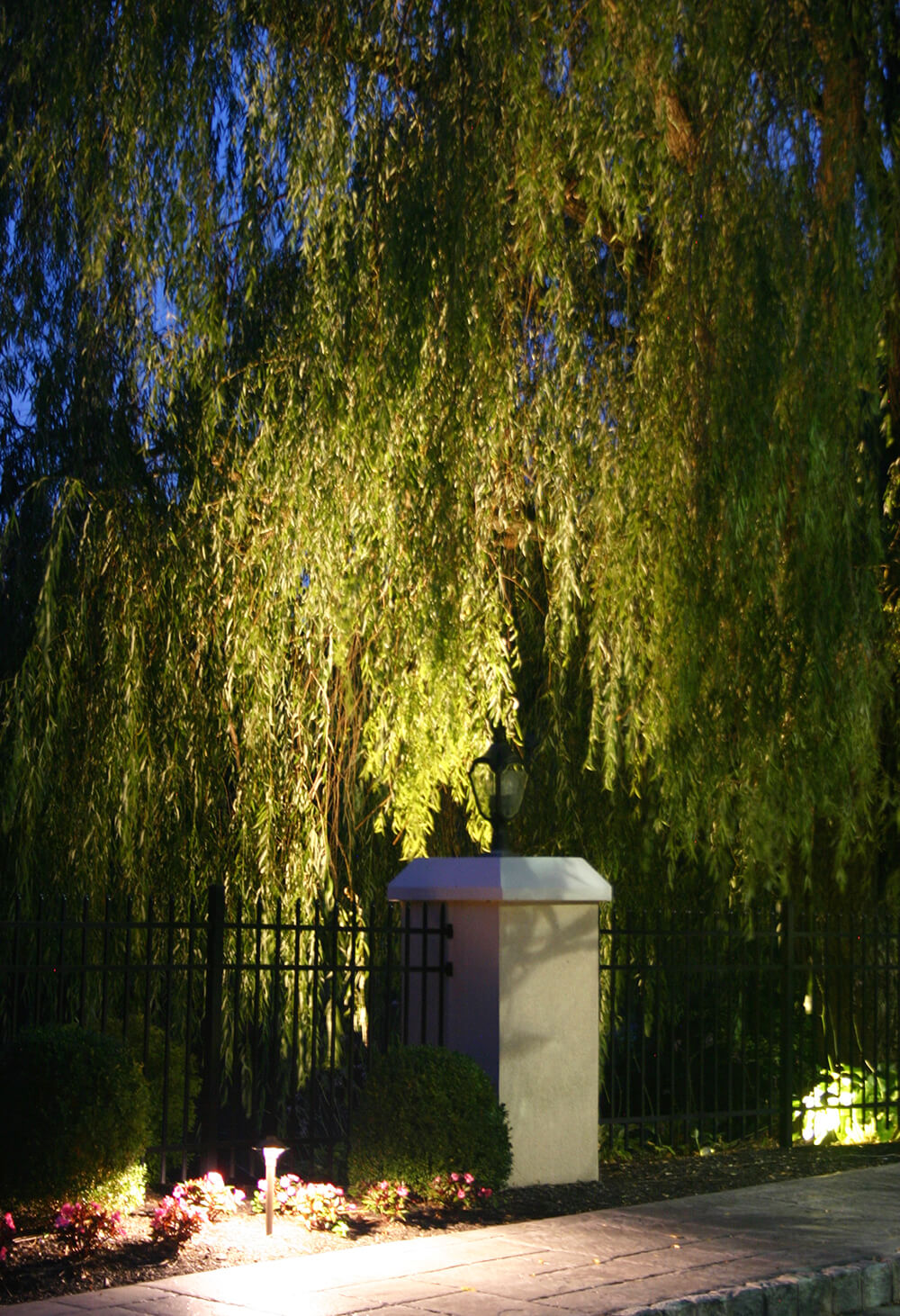 Weeping willow with specialty lighting