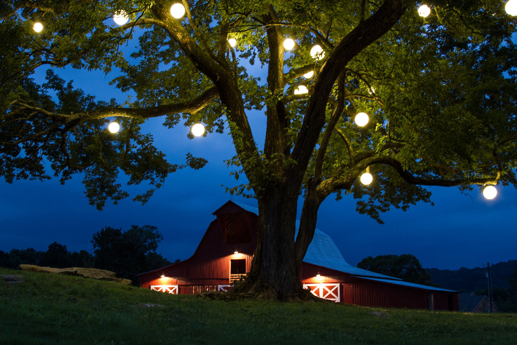 Lights hung on a tree near a barn