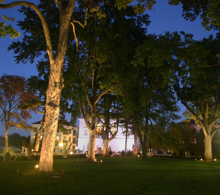 Illuminated trees and grass area
