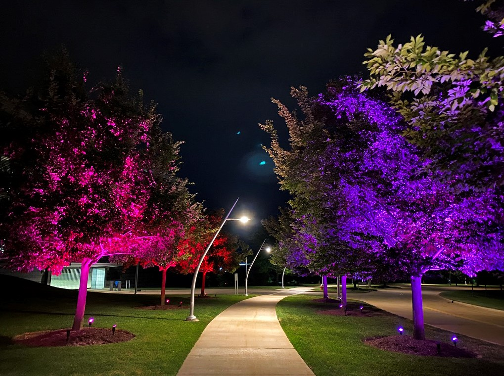 colorfully lit trees