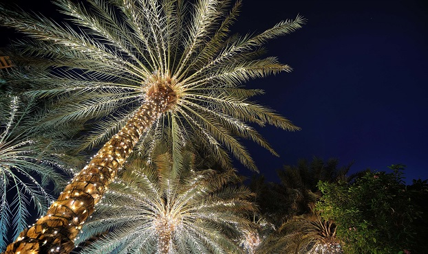 Palm Trees with string lighting