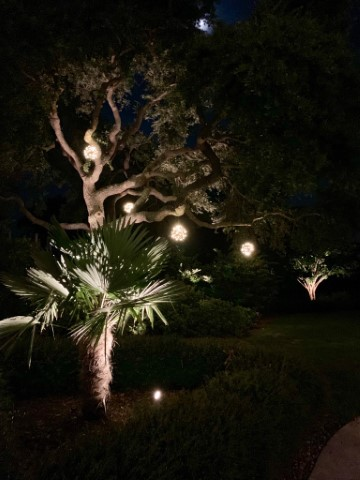bulb lighting hanging from trees at night time