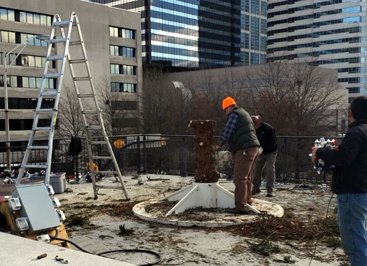 Capitol Christmas tree becomes mulch for local parks