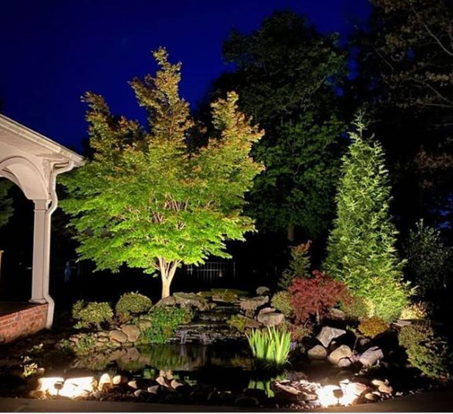 pond surrounded by trees and plants lit by OLP lighting
