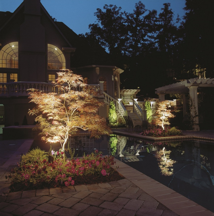 pool and plants shown with outdoor lighting