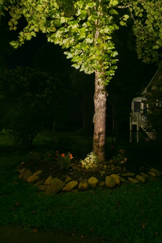 tree in front yard with illumination lighting