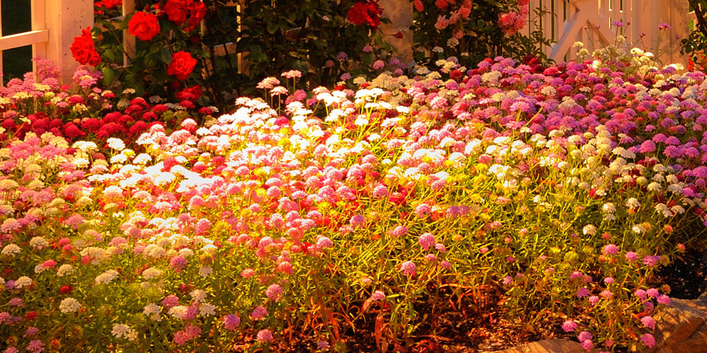 Flower garden with special lighting