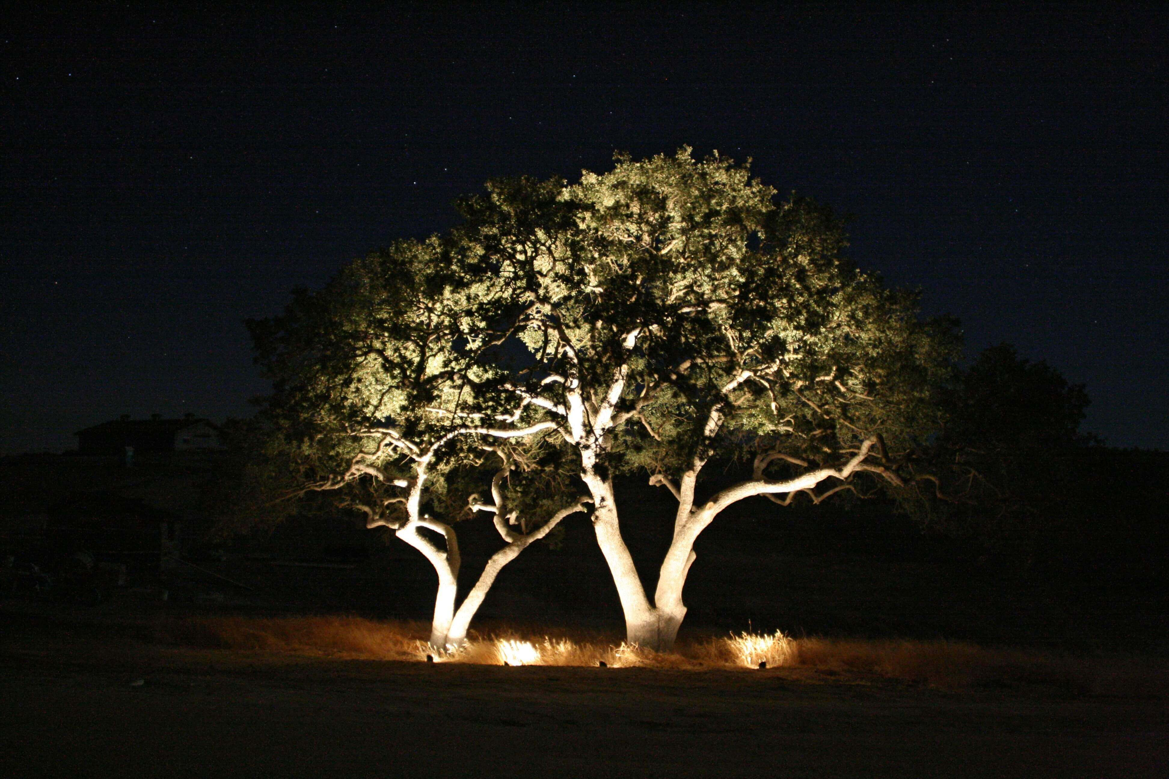 Trees with uplighting