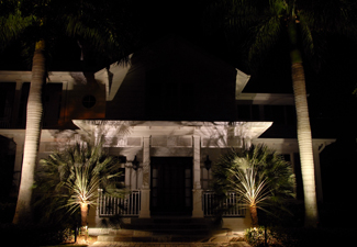 Outdoor lighting illuminating palm trees