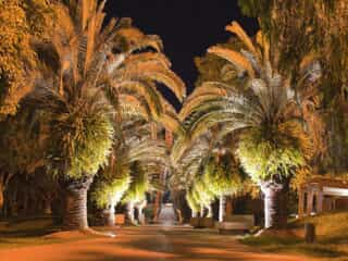 A road lined with palm trees and great outdoor lighting