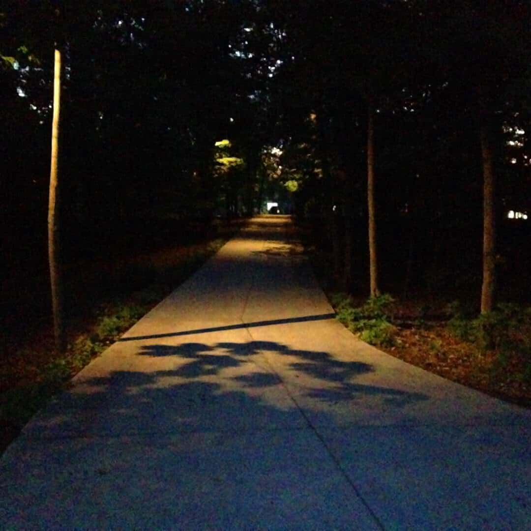 walkway lined by trees and lit by lighting