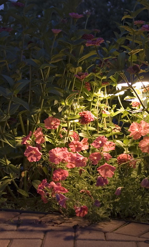 flower garden with light