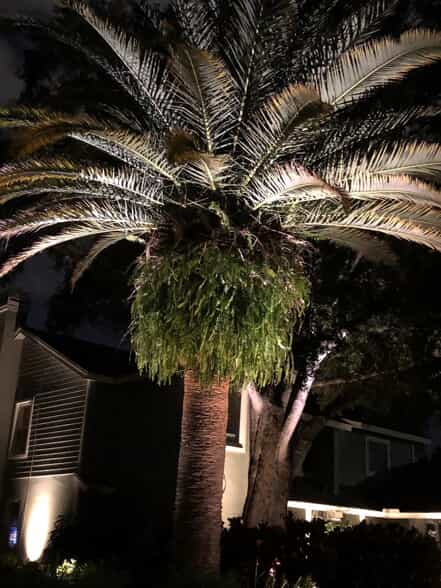 Palm tree with lighting