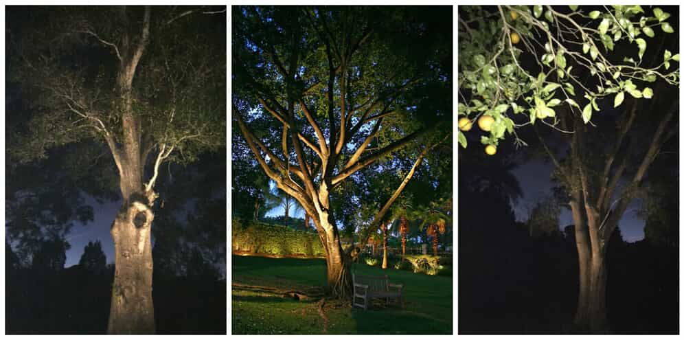 Side by side images of trees with special lighting