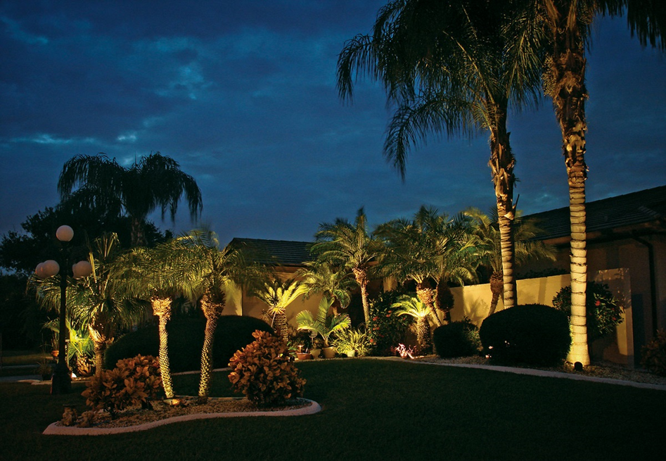 palm trees and path lighting