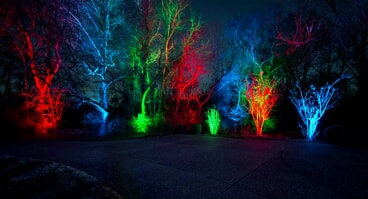 landscape tree lighting with red, green and blue lights