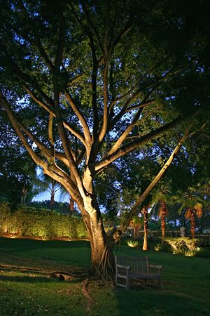 large tree with lighting