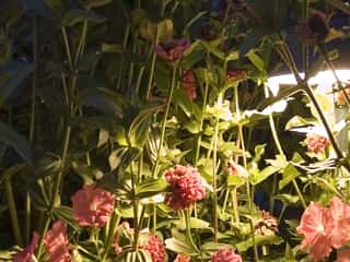 lighting in plants