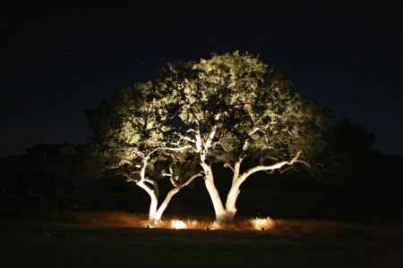 Tree Uplighting