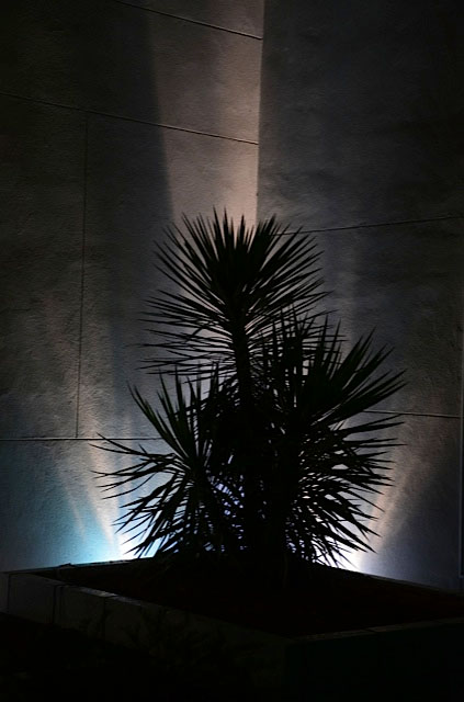 dark palm lighting
