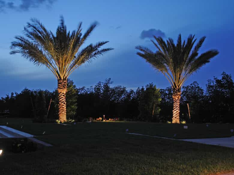 Two large palm trees with special lighting