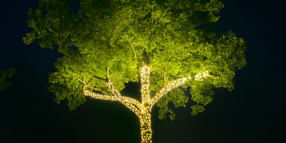 Oak Tree Lighting