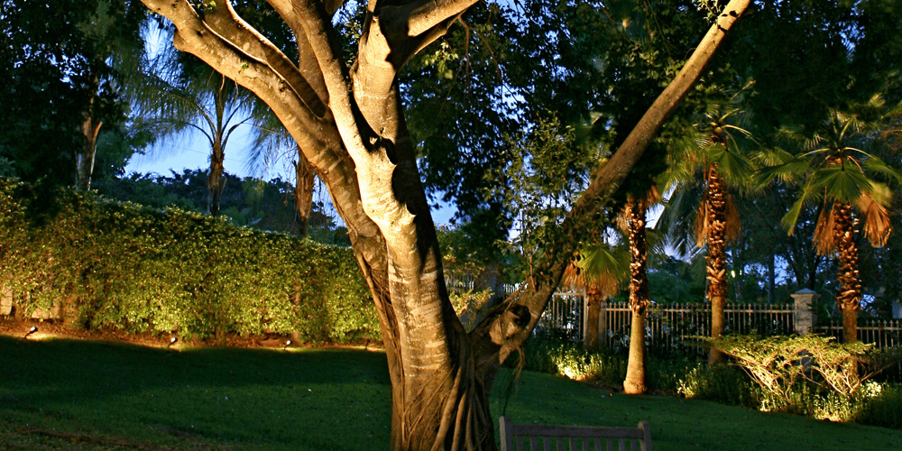 Close up of a large tree with special lighting
