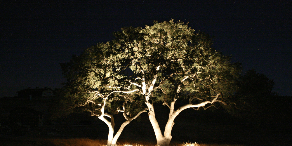 Large tree lit against a pitch black night